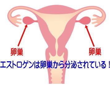 エストロゲンは卵巣から分泌
